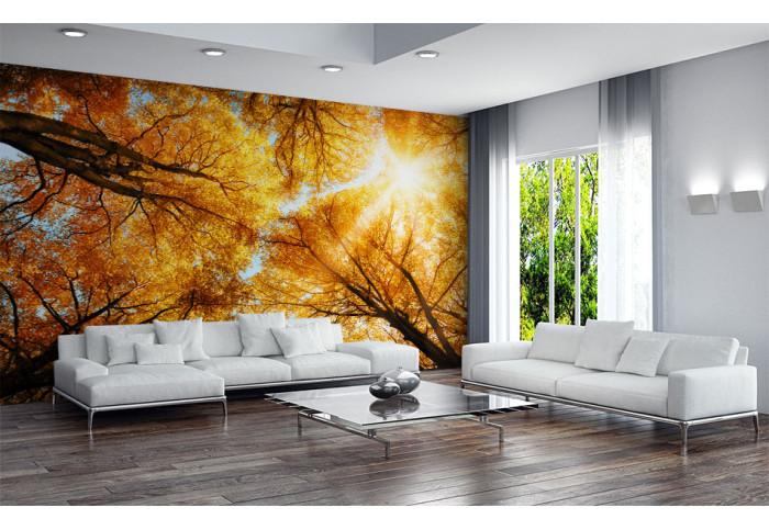 Фототапет Есенни дървета