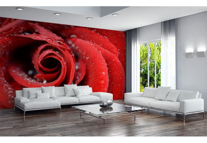 Фототапет Червена роза