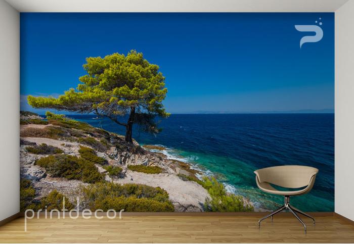 Дърво на скалистия бряг